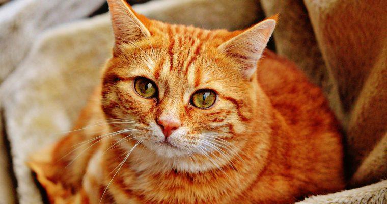 【新商品のお知らせ】猫の爪・ひっかきにも傷つきにくい強いソファーがついに入荷しました!