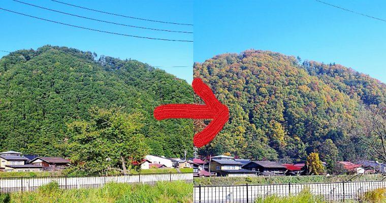 飛騨・高山の紅葉もいよいよ見ごろ!当店からの景色もすっかり秋です。